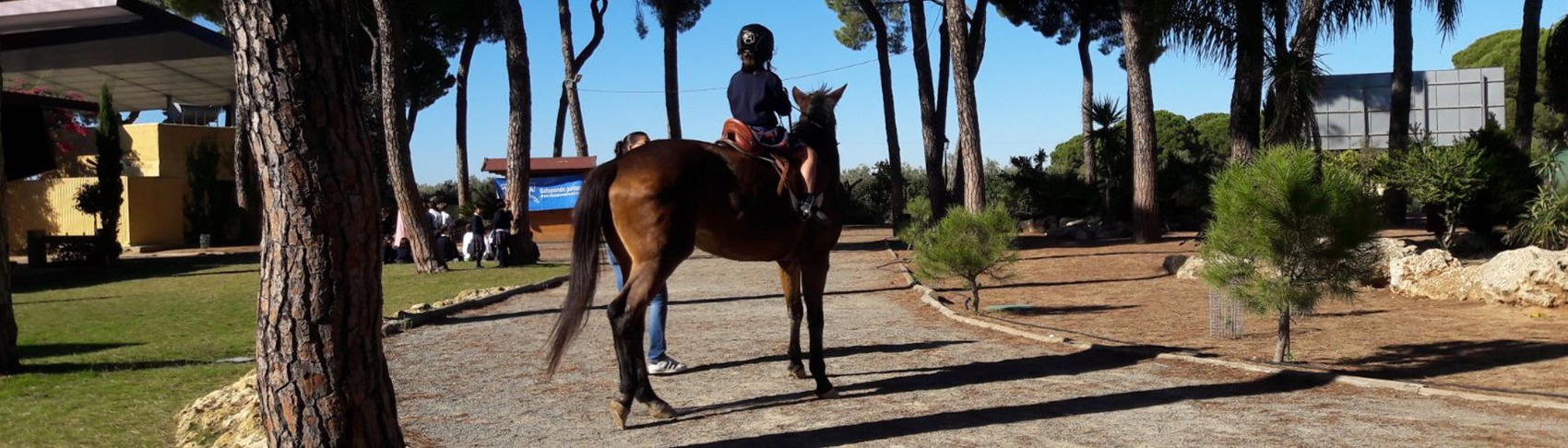 caballos-anglo-arabes-sin-tx